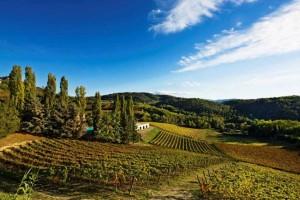 Panorama sulle vigne di Casa Wallace