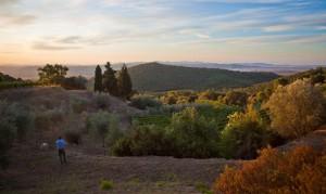 Fuorimondo - Le vigne
